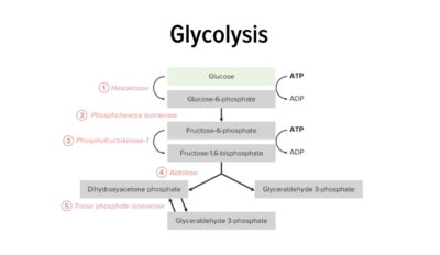 Glycolysis featured image