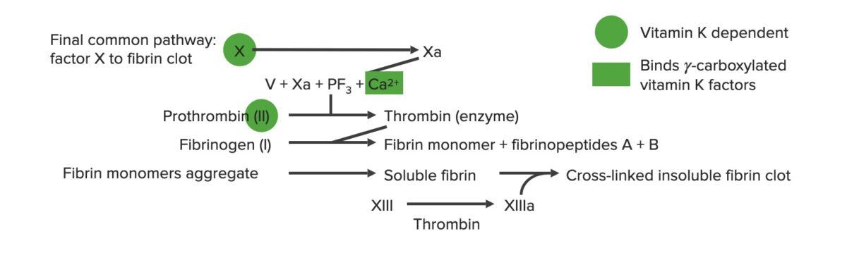Hemostasis final common pathway