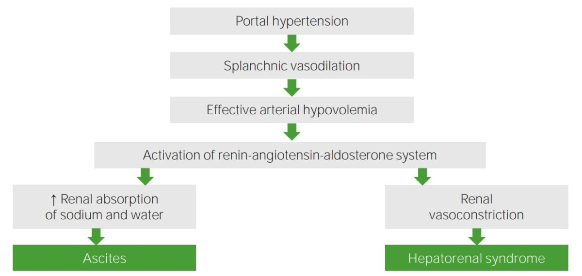 Hepatorenal syndrome pathophysiology