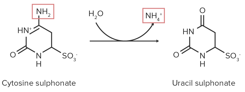 Hydrolytic deamination reaction image