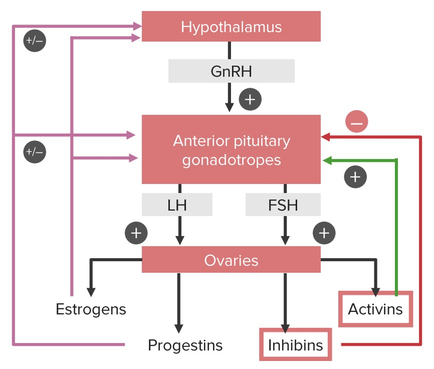 Hypothalamic pituitary ovarian axis