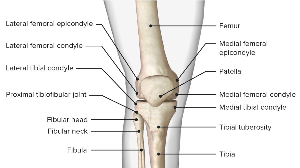Image showcasing the bony landmarks of the femur, tibia, and patella bones. Anterior surface