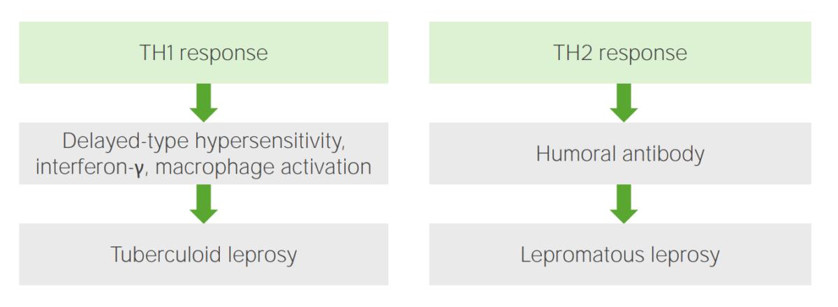 Immune response to leprosy