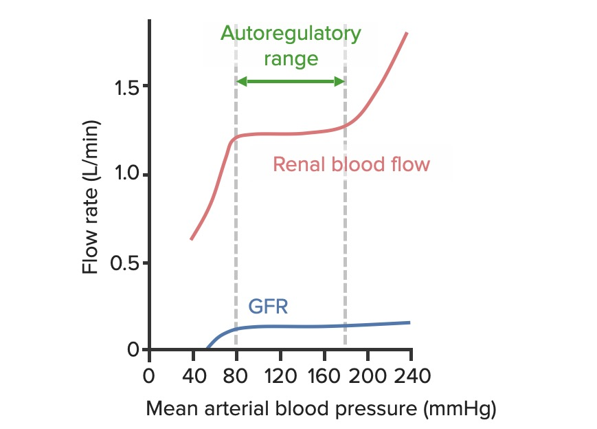 Impact of mean arterial blood pressure on the flow rate of renal blood flow (RBF) and glomerular filtration rate (GFR)