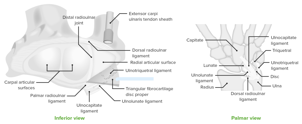 Inferior view of the distal radio-ulnar joint