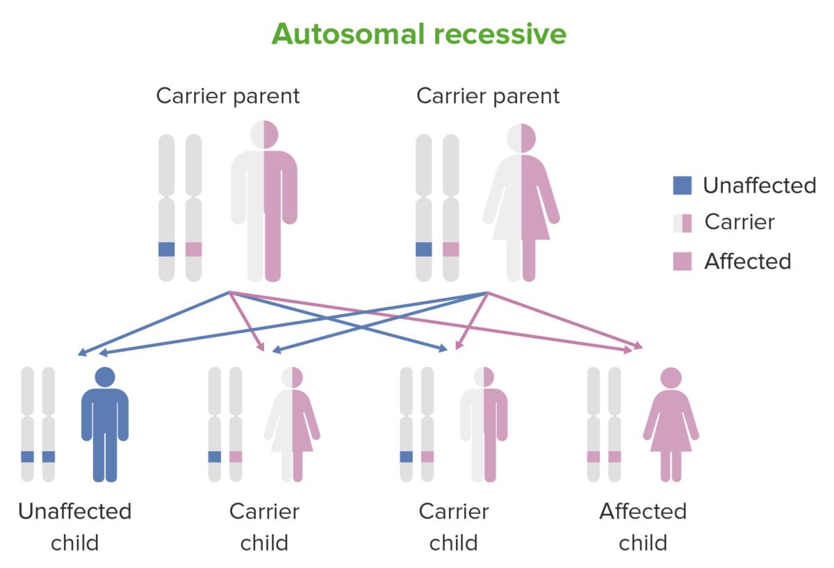 Inheritance pattern of autosomal recessive conditions