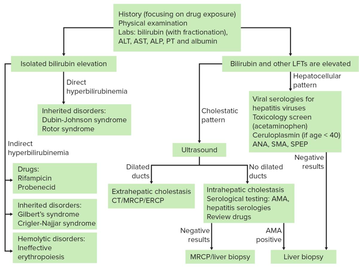 Jaundice diagnosis Diagram