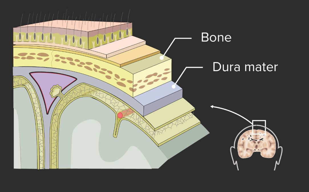 Layers of tissue between the skin and the brain