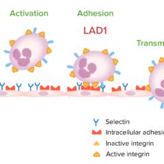 Leukocyte migration Leukocyte adhesion deficiency type 1