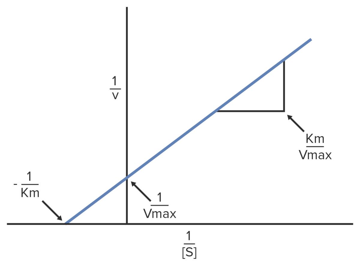 Lineweaver Burk diagram