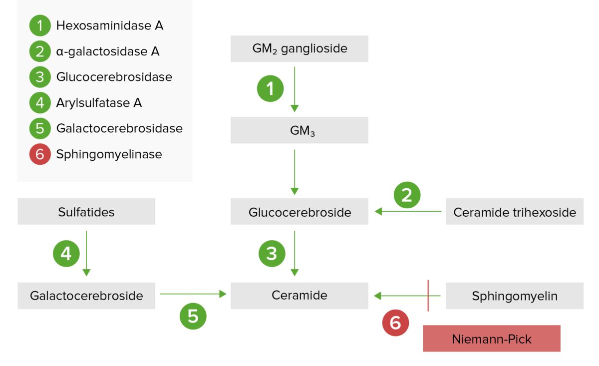 Lysosomal storage pathway