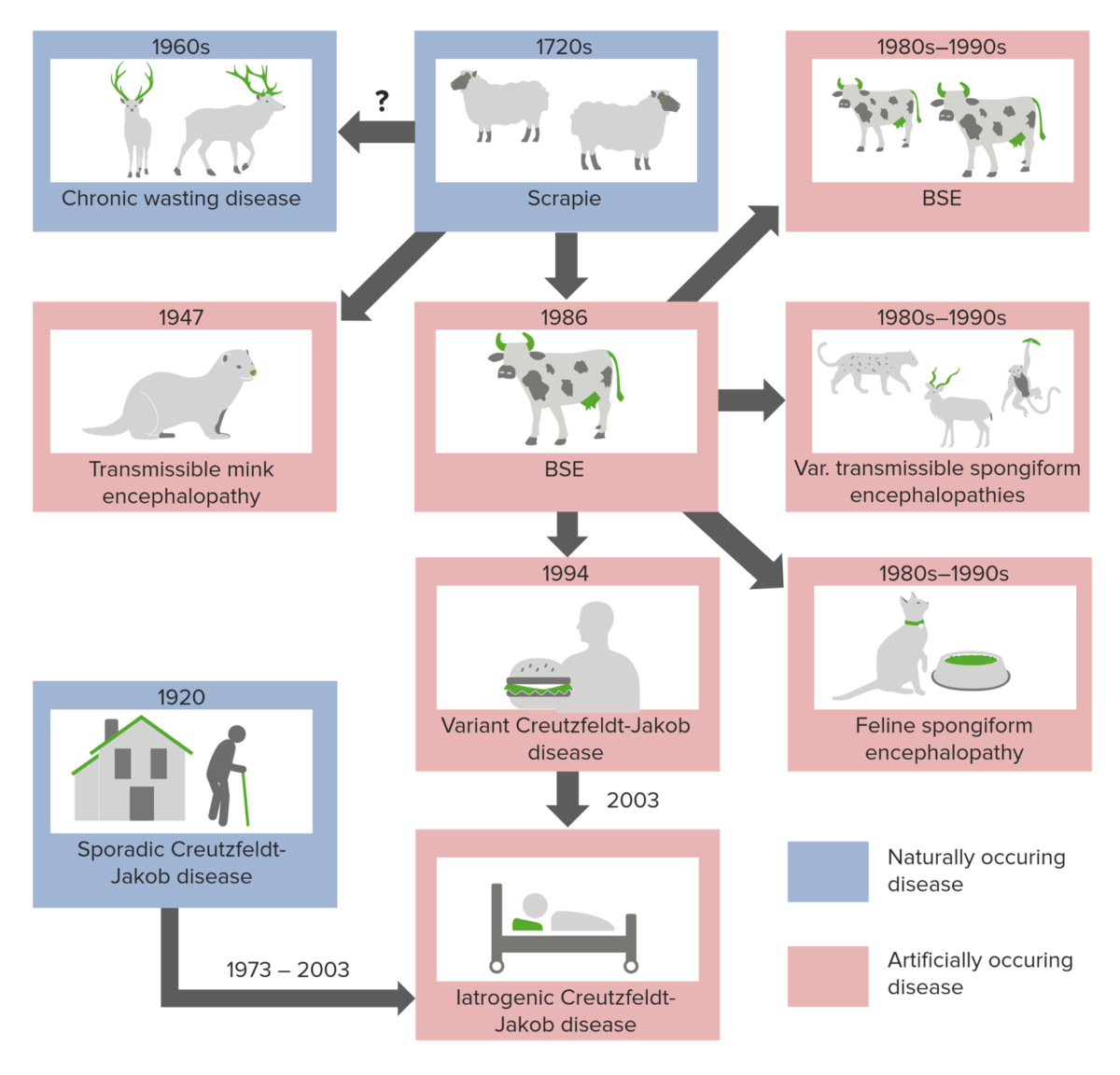 Mad cow disease transmission