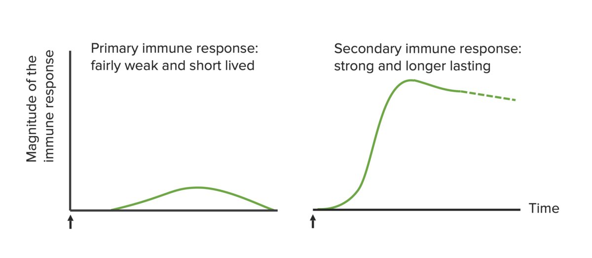 Magnitude of immune response