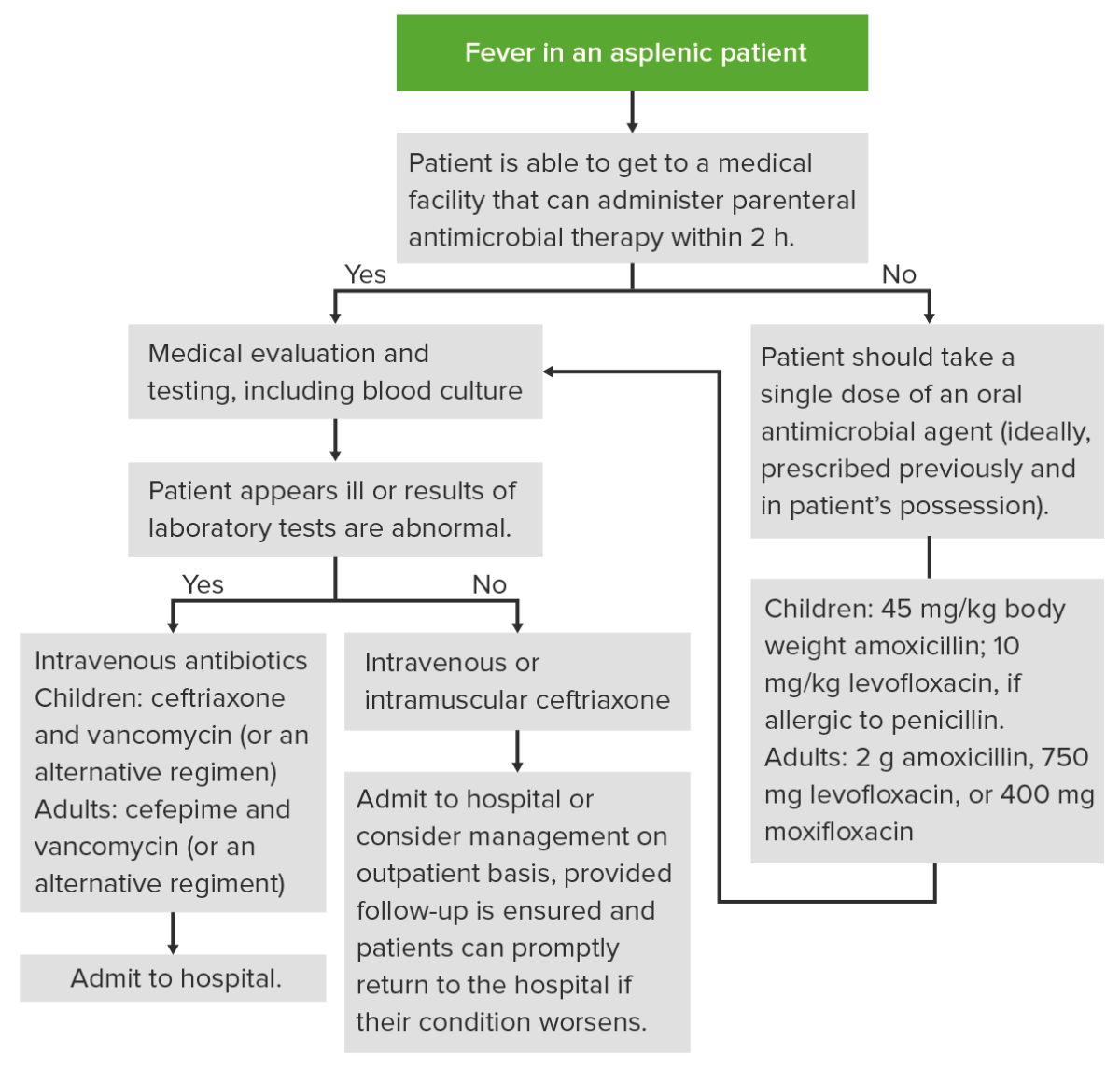 Management of Fever in an Asplenic Patient