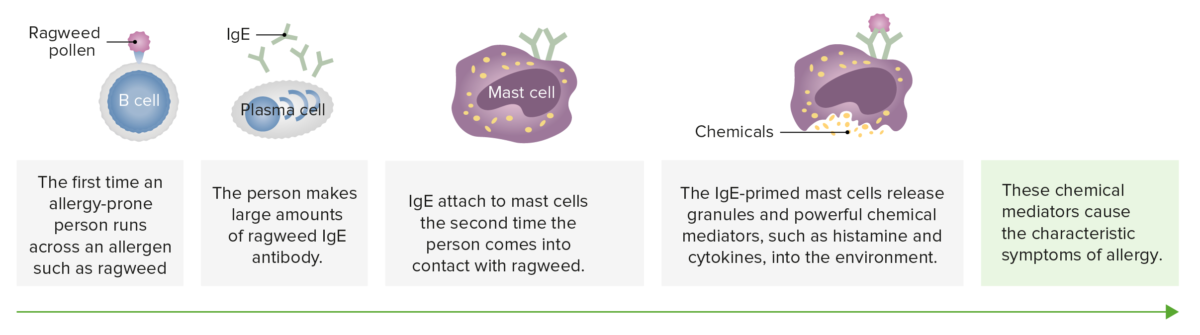 Mast cells in allergy