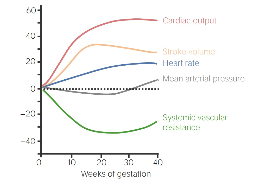 Maternal changes in cardiovascular system