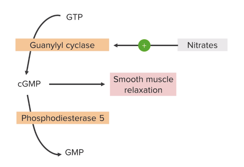 Mechanism of action for nitrates