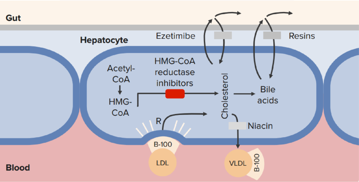 Mechanism of action of statins