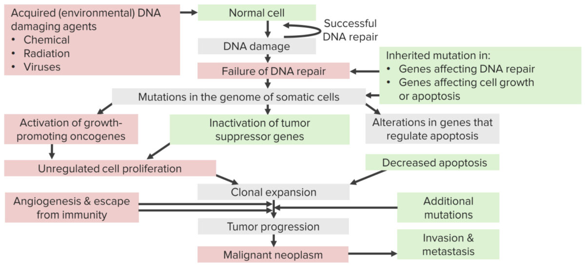 Mechanisms of carcinogenesis due to carcinogens causing DNA damage