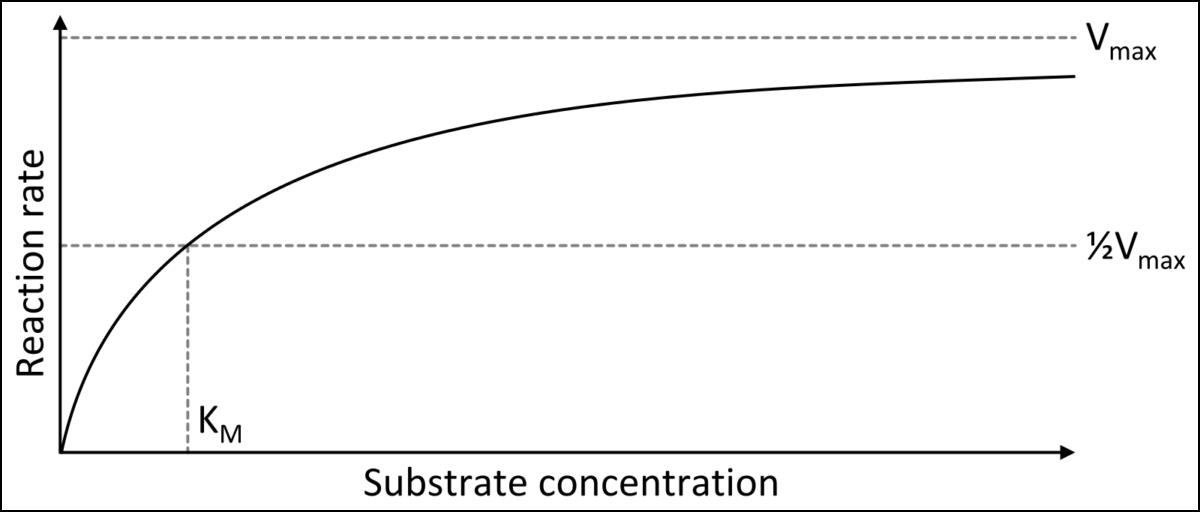 Michaelis Menten curve