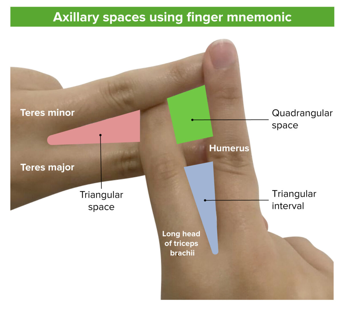 Mnemonic of axillary spaces