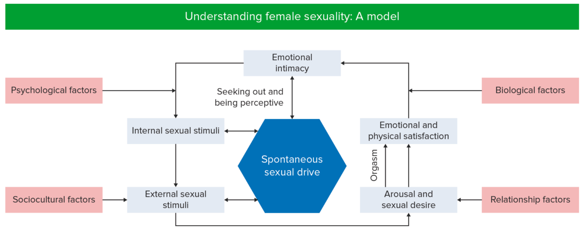 Model of Female sexuality
