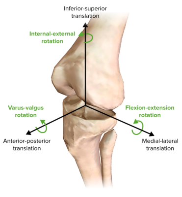 Motions of the knee