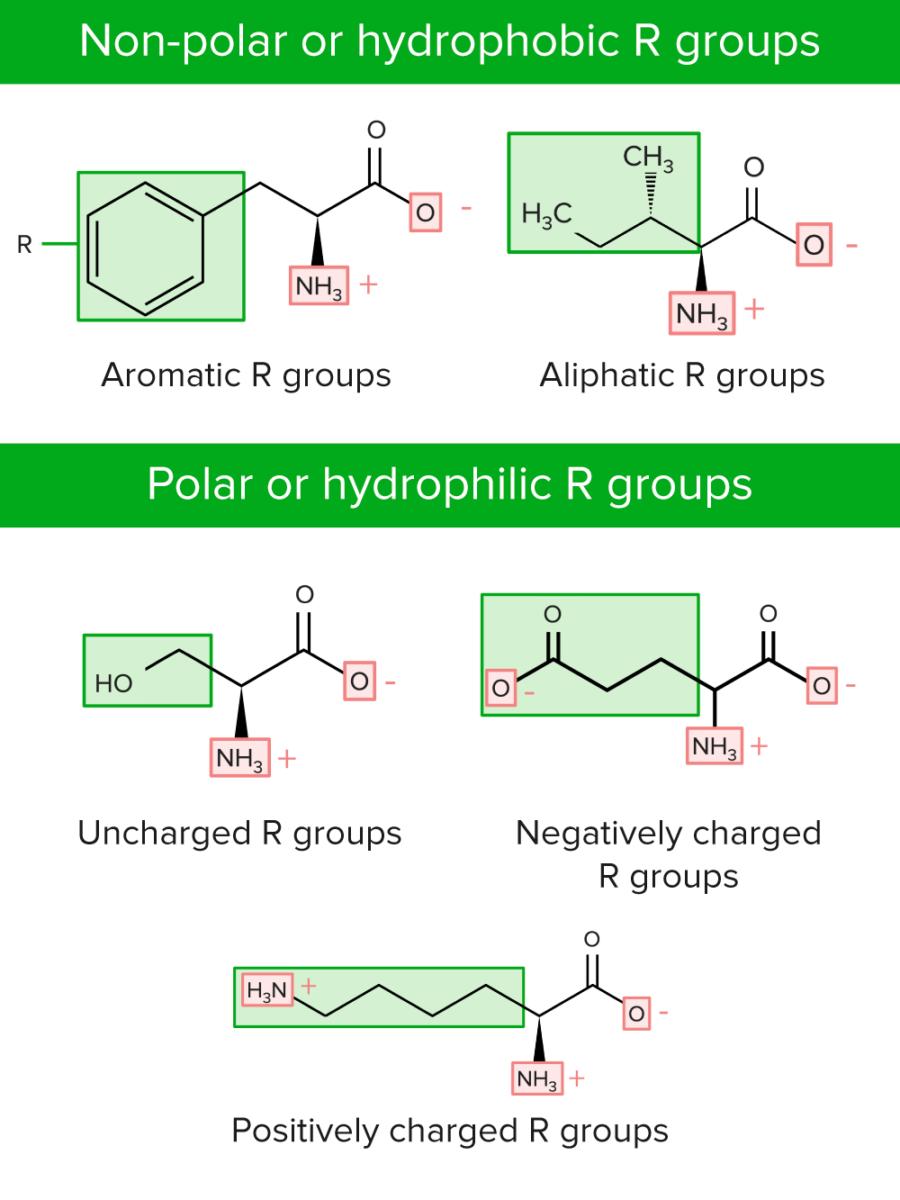 Non polar and polar R groups