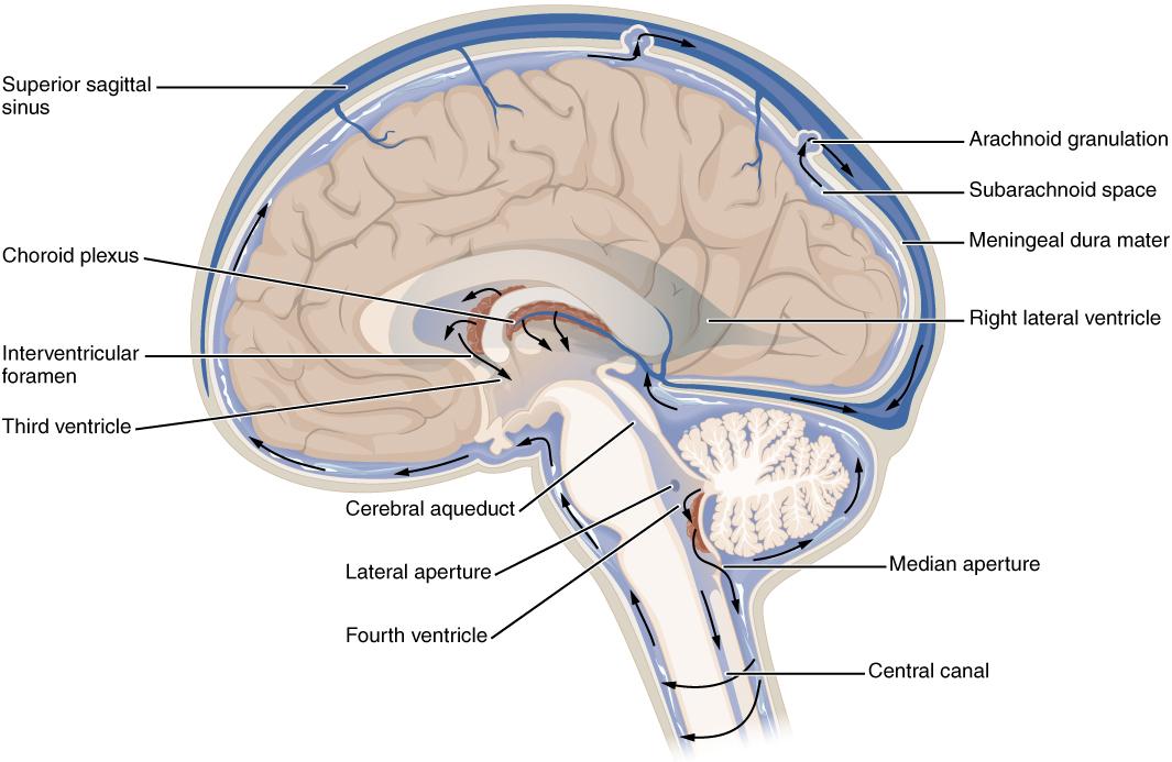 Normal circulation hydrocephalus