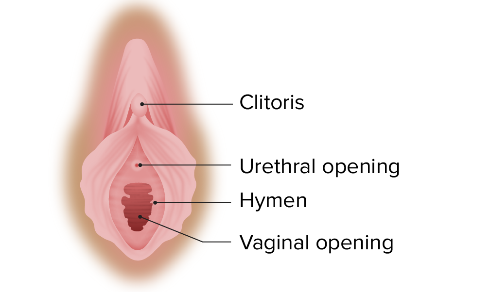 Normal hymen