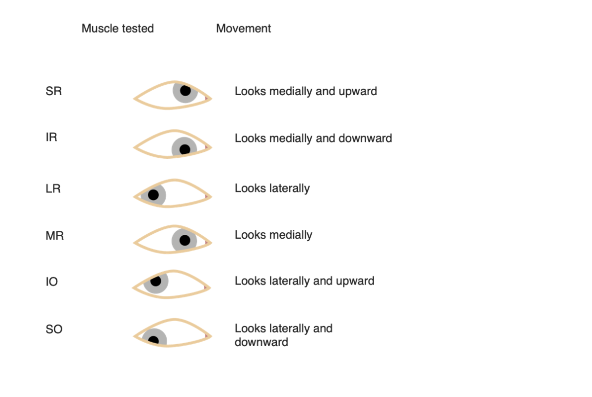 Ocular muscles - muscle tested and movement