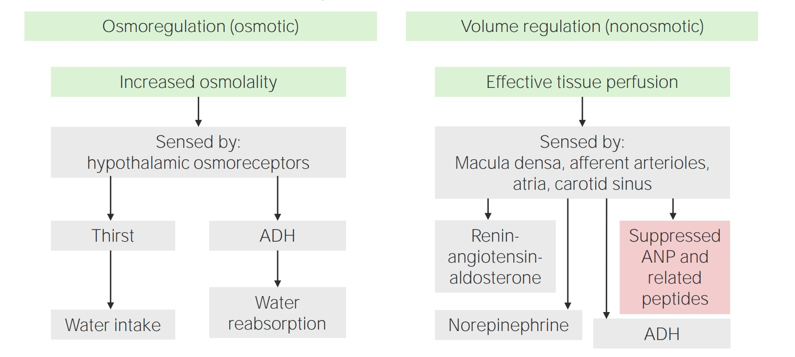 Osmotic and Non-osmotic Regulation of ADH