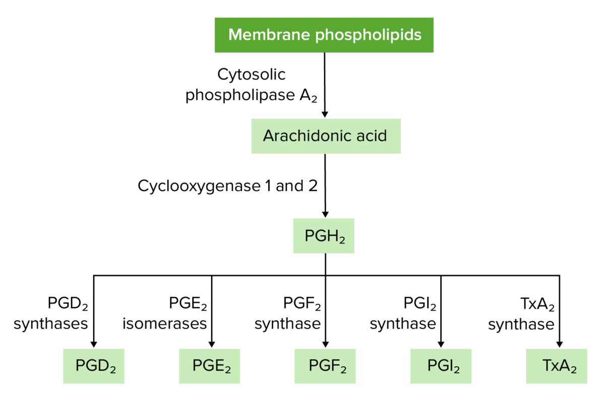 Overview of prostaglandin and thromboxane synthesis
