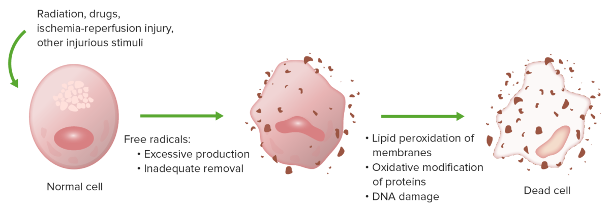 Oxidative stress causes cell injury