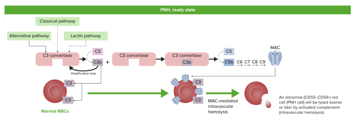 PNH physiology ready state