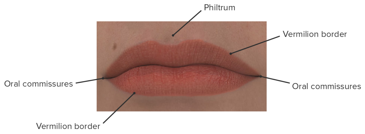 Parts of the lips depiction