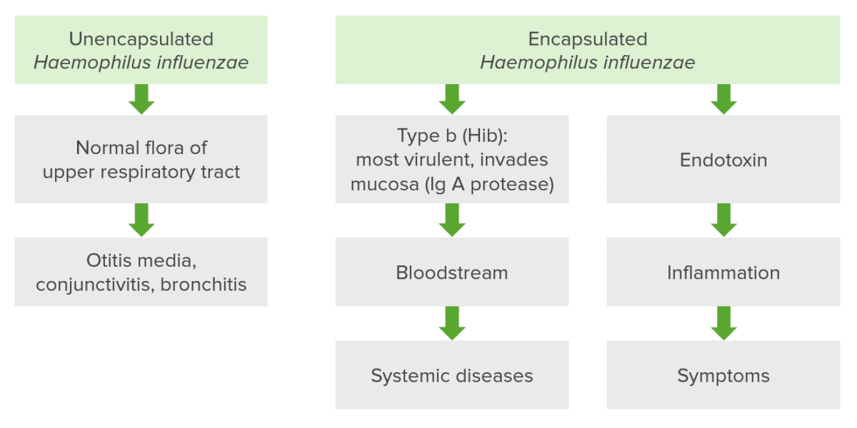 Pathogenesis of Haemophilus influenzae