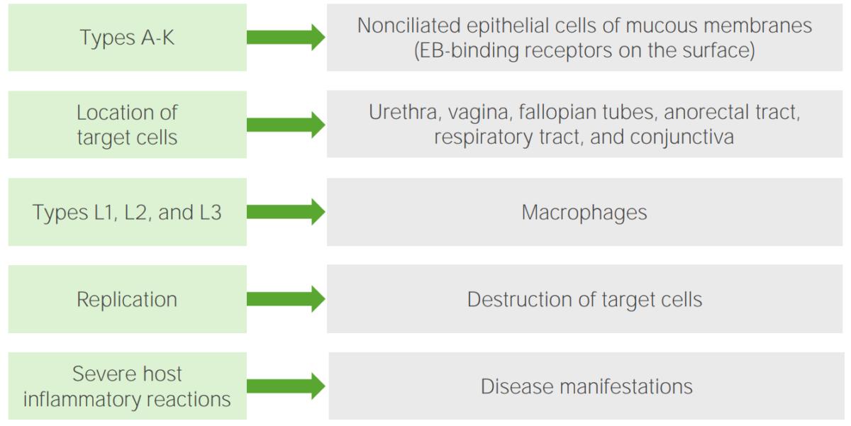 Pathogenesis of Chlamydia trachomatis