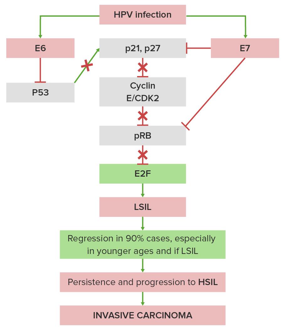 Pathogenesis of cervical carcinoma diagram