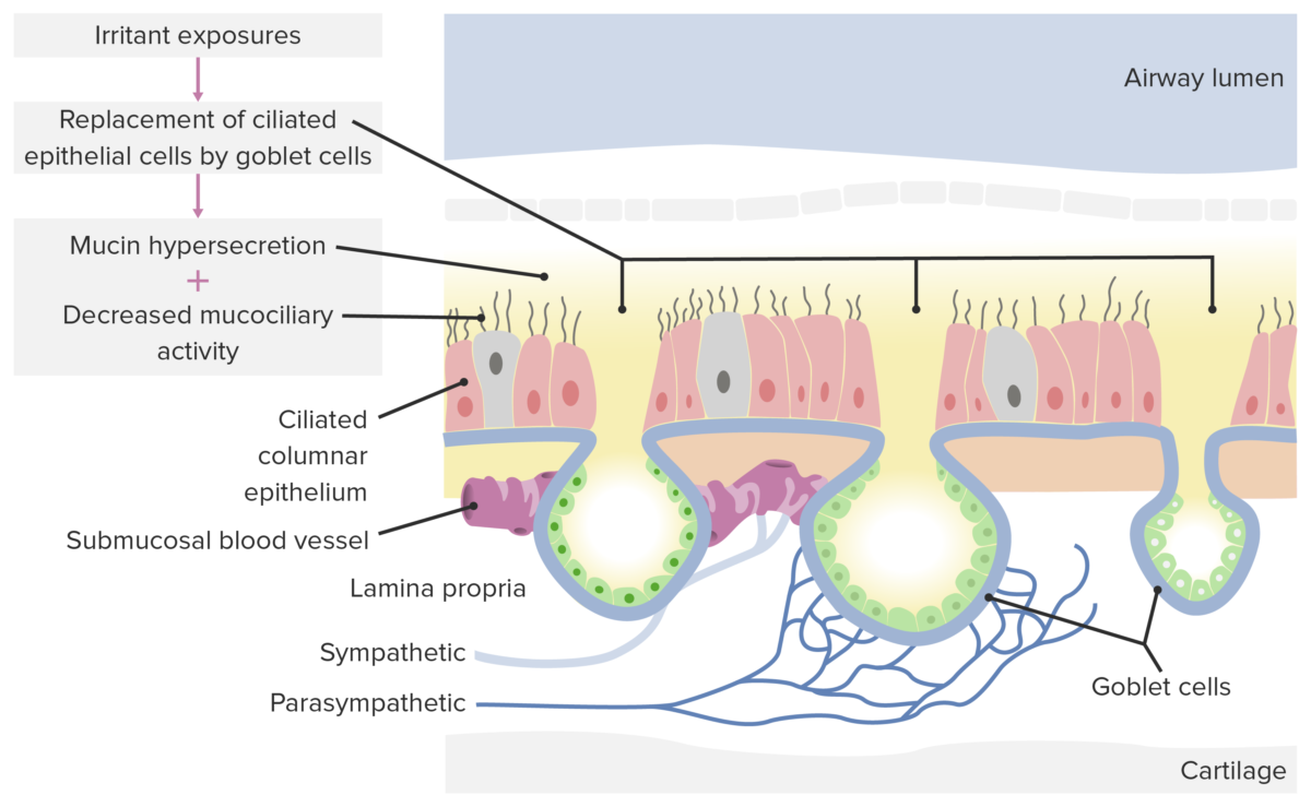 Pathological changes in non-allergic rhinitis