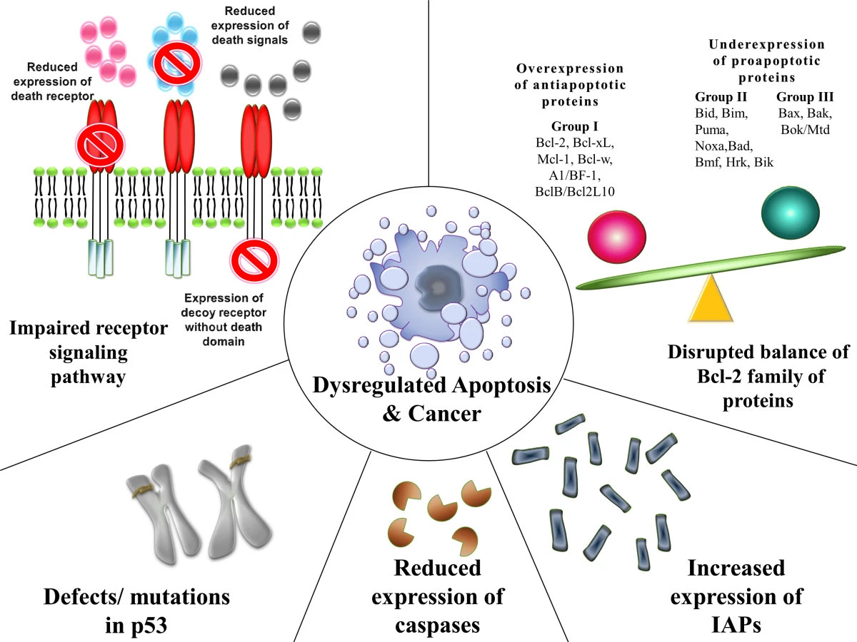 Pathophysiology of Cancer Carcinogenesis
