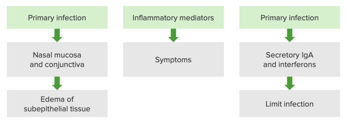 Pathophysiology of a rhinovirus infection