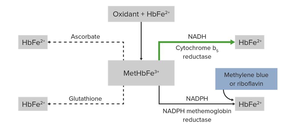 Pathophysiology of methemoglobin