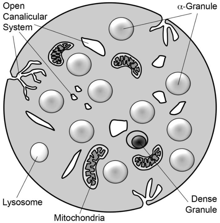Platelet Granule Exocytosis