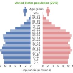 Population pyramid USA