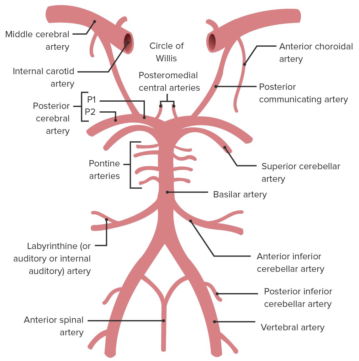 Posterior inferior cerebellar artery (PICA)