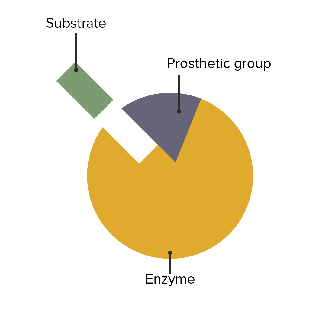 The interaction between enzymes, prosthetic groups, and substrate attachment.
