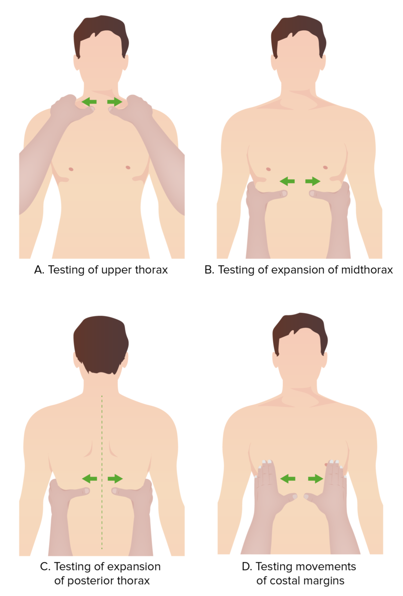 Pulmonary Exam - Palpation