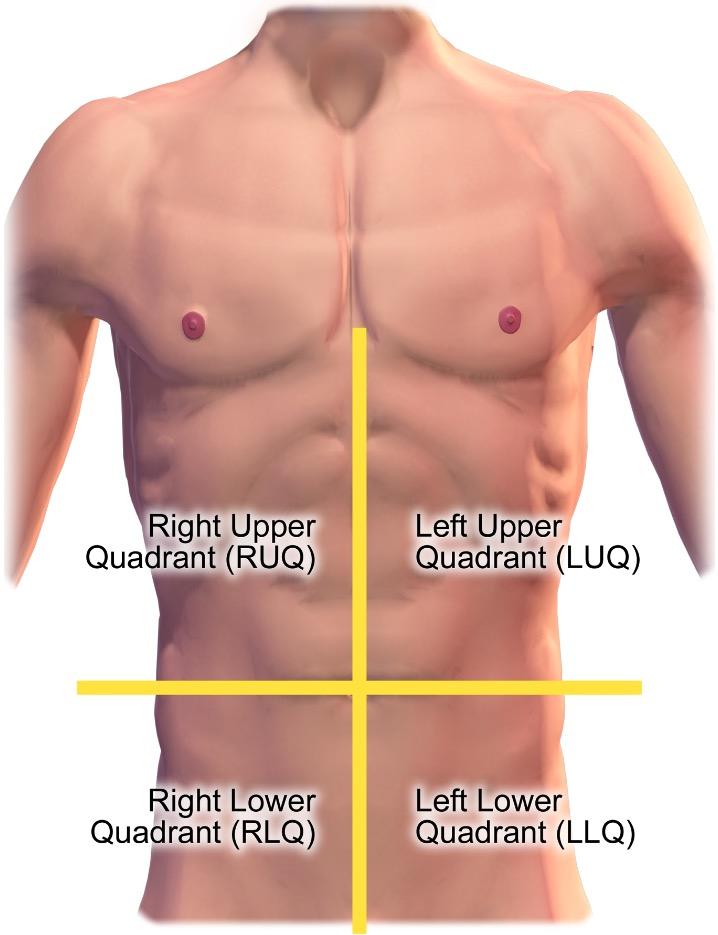 Quadrants of the abdomen
