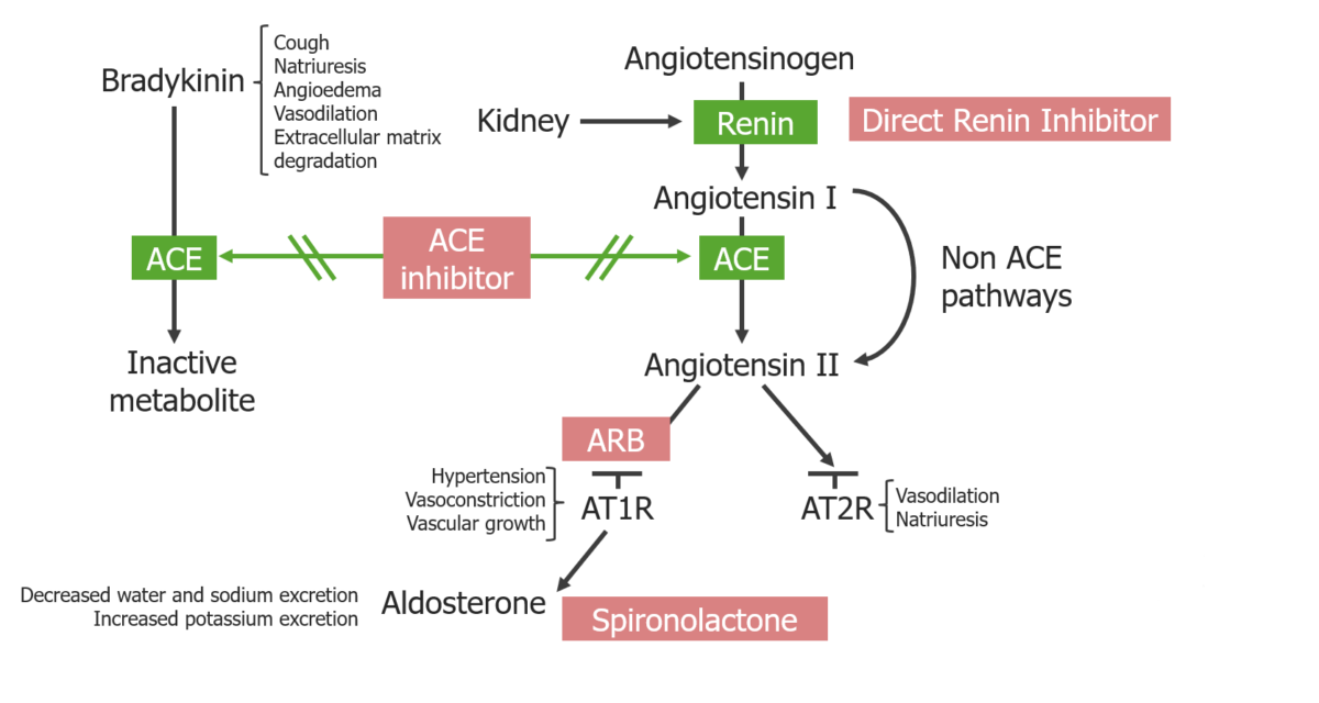 RAAS inhibitors and their location of action overview